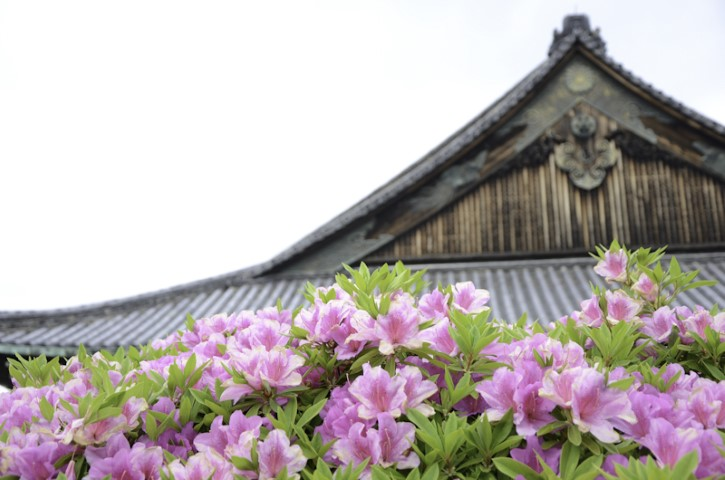 Nijo Castle in May