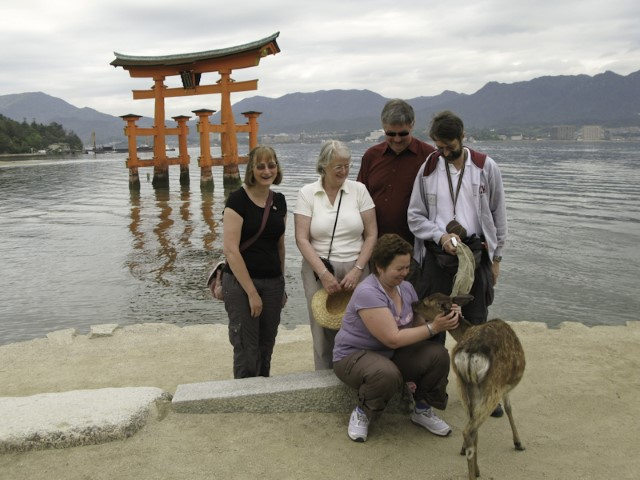 Tame Deer in Miyajima