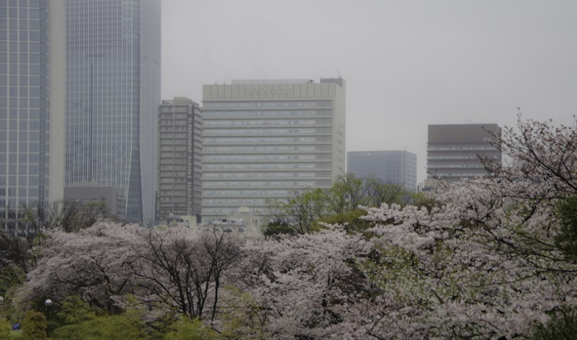 Blossoms in the city