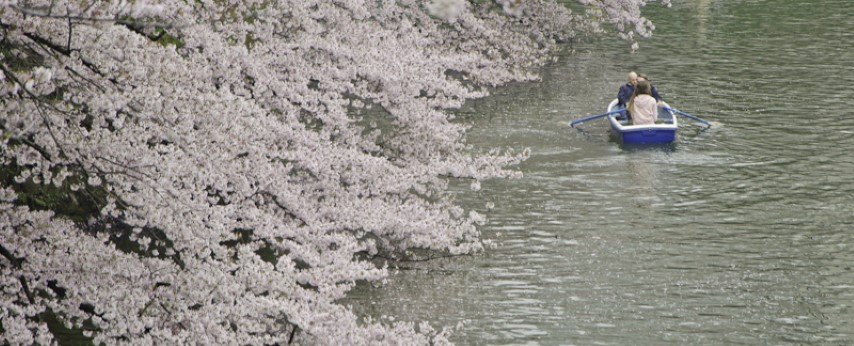 Blossoms at the moat
