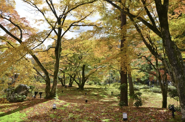 Colours of autumn in Japan