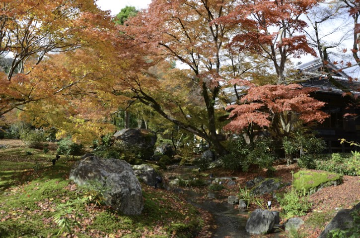 Colors of Fall, Kyoto